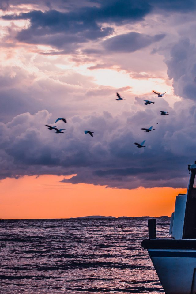 Sea Sunset Birds Sky Ocean Ship Nature Blue Android wallpaper