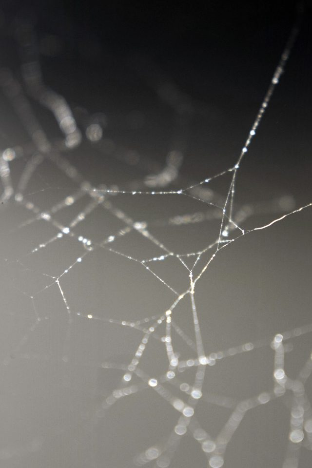 Spider Web Nature Rain Water Pattern Bw Android wallpaper
