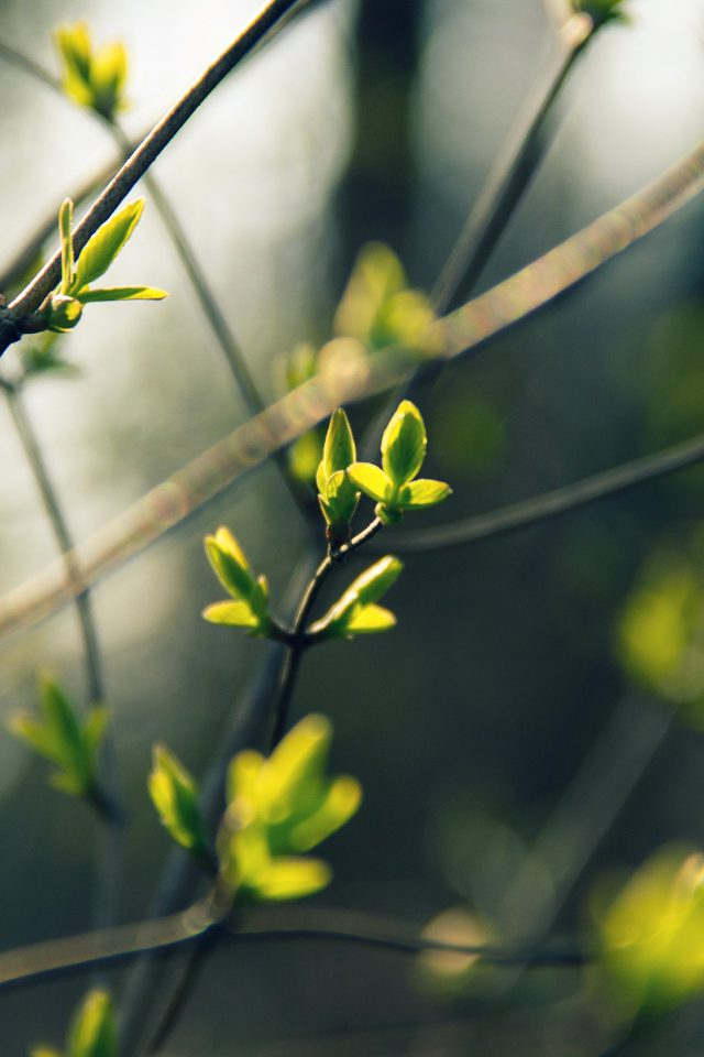Spring Leave Green Nature Bokeh Tree Android wallpaper