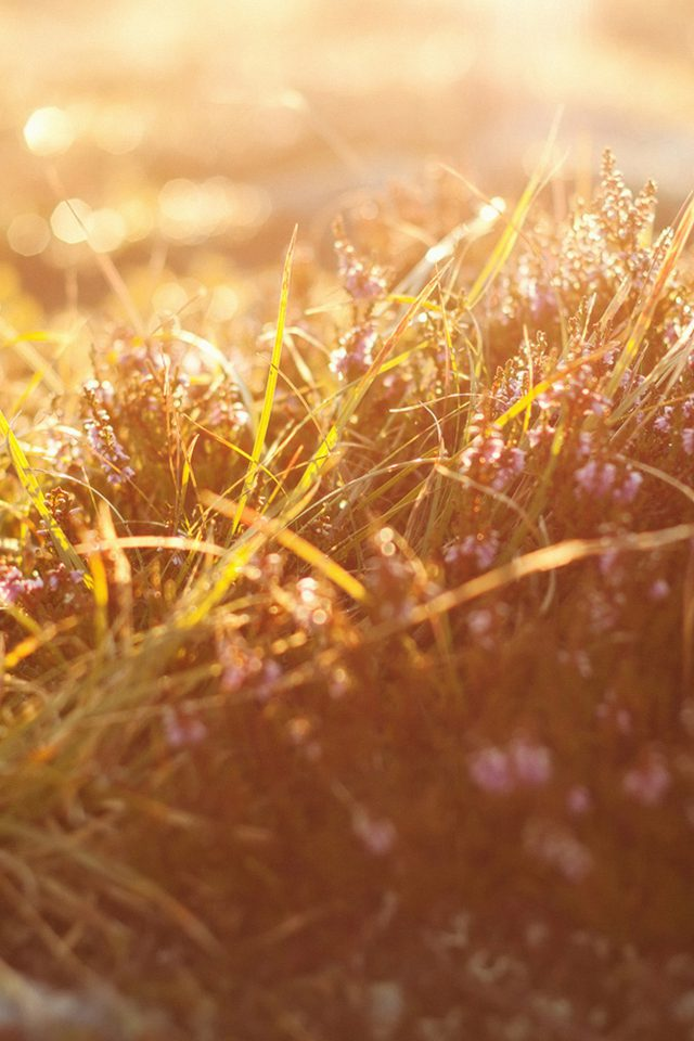 Sun Rise Flower Grass Love Nature Android wallpaper