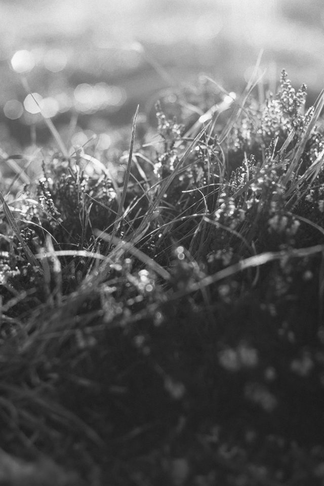 Sun Rise Green Leaf Bw Flower Grass Love Nature Android wallpaper