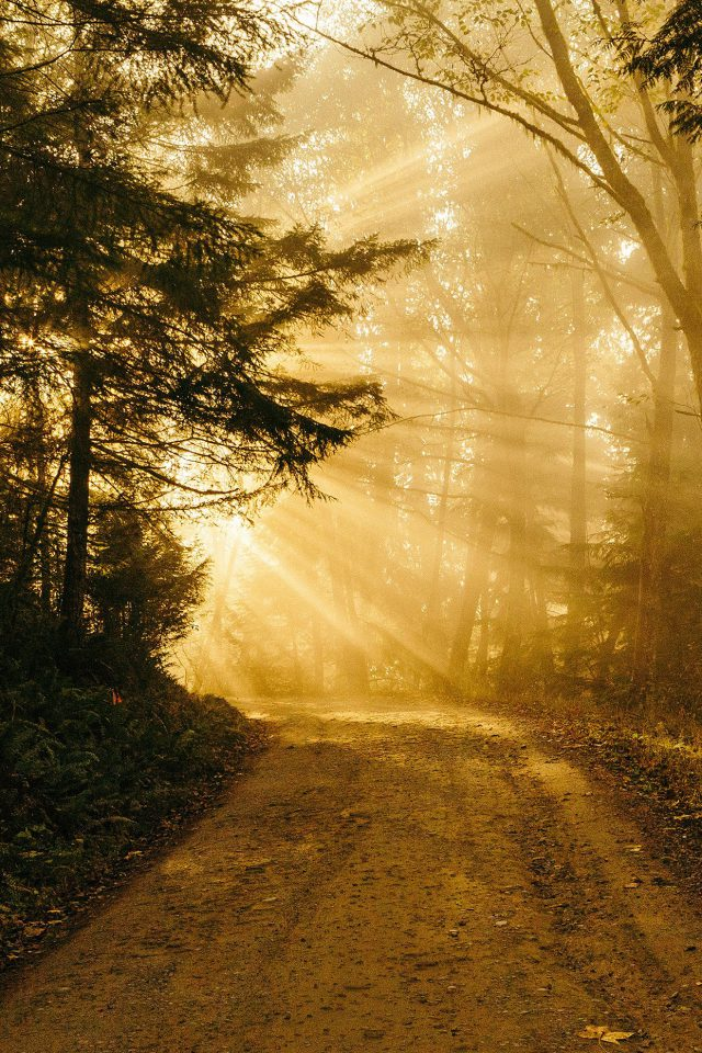 Sunny Road Wood Forest Light Tree Nature Gold Android wallpaper