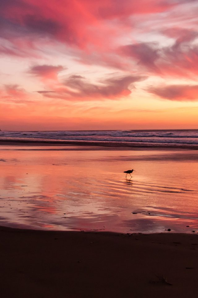 Sunset Beach Bird Red Orange Nature Sea Android wallpaper