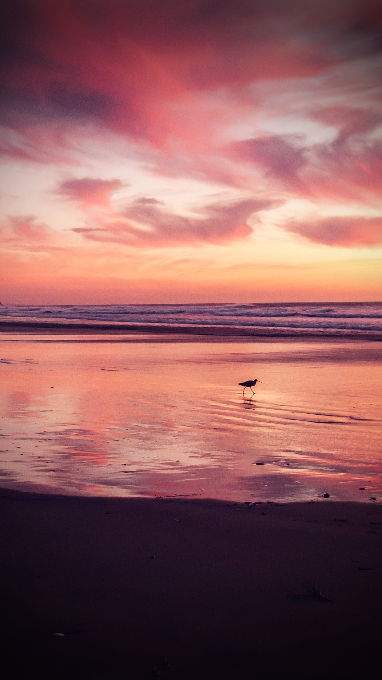 Sunset Beach Bird Red Orange Nature Sea Vignette Android wallpaper