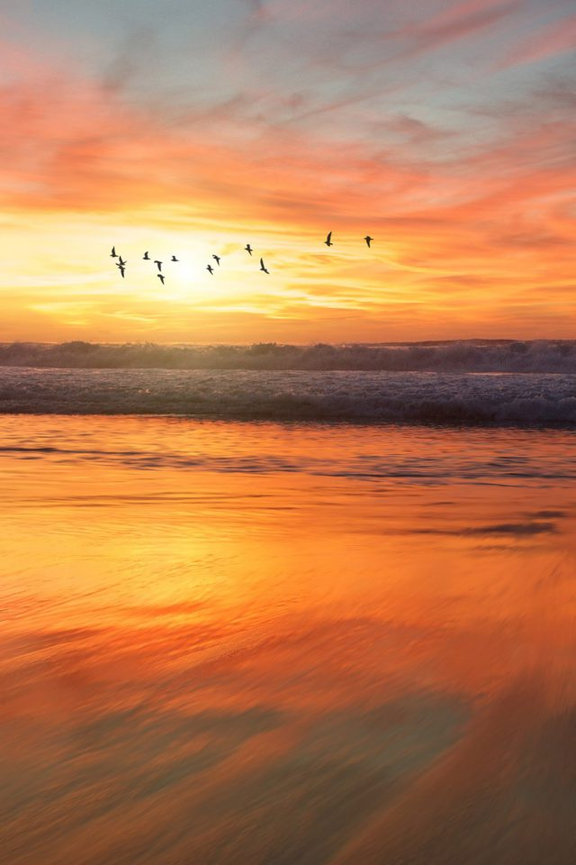 Sunset Sea Nature Orange Summer Sky Bird Android wallpaper