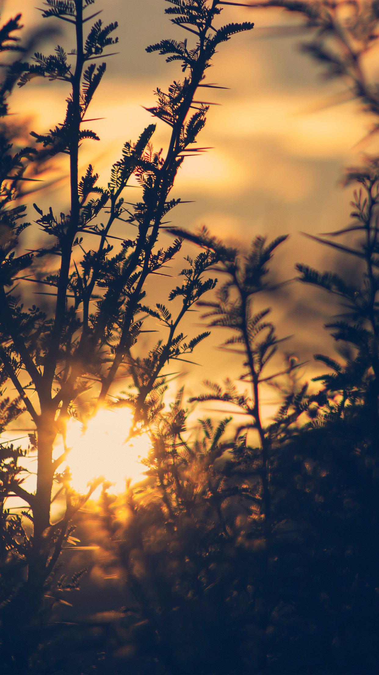 Sunset Tree Light Flare Bokeh Nature Photo Android wallpaper