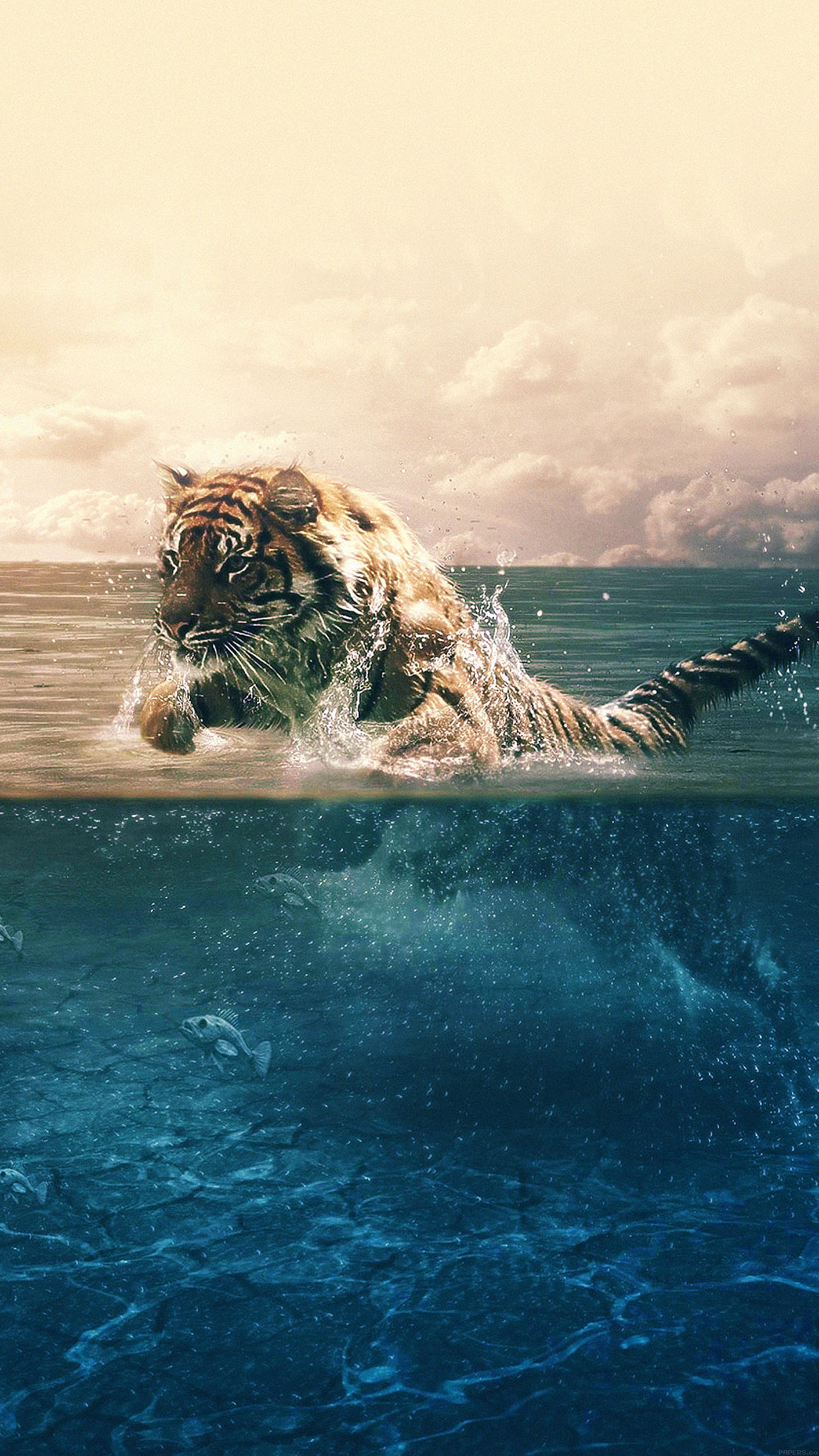 Tiger Running Blue Sea Nature Android Wallpaper Android Hd Wallpapers