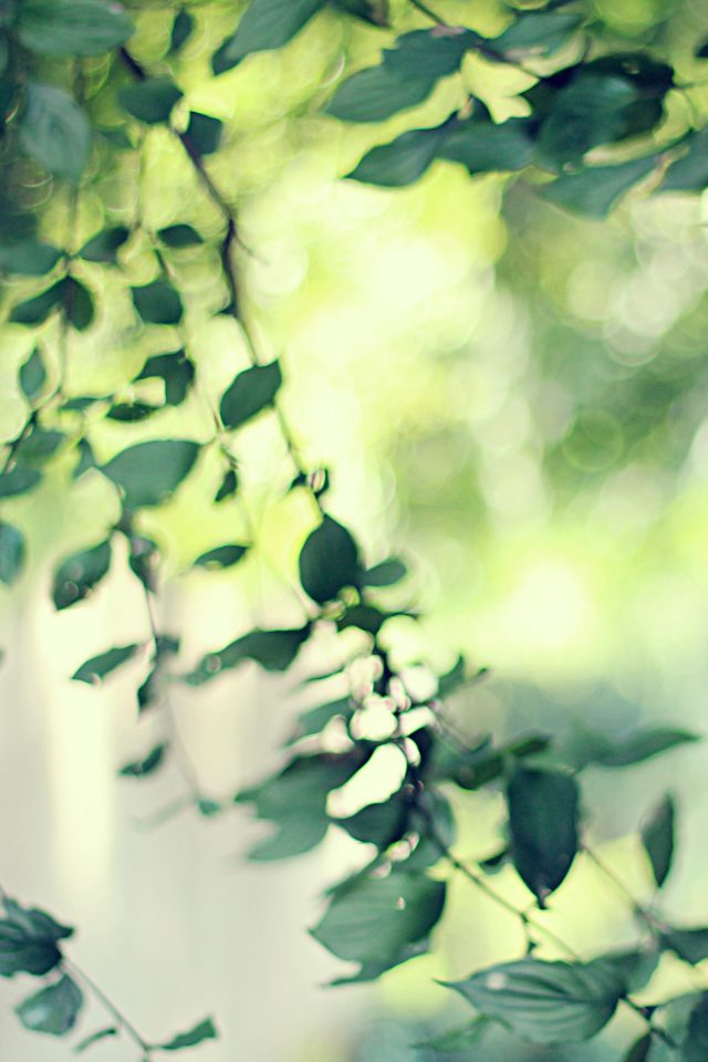 Tree Bokeh Calm Morning Nature Park Android wallpaper