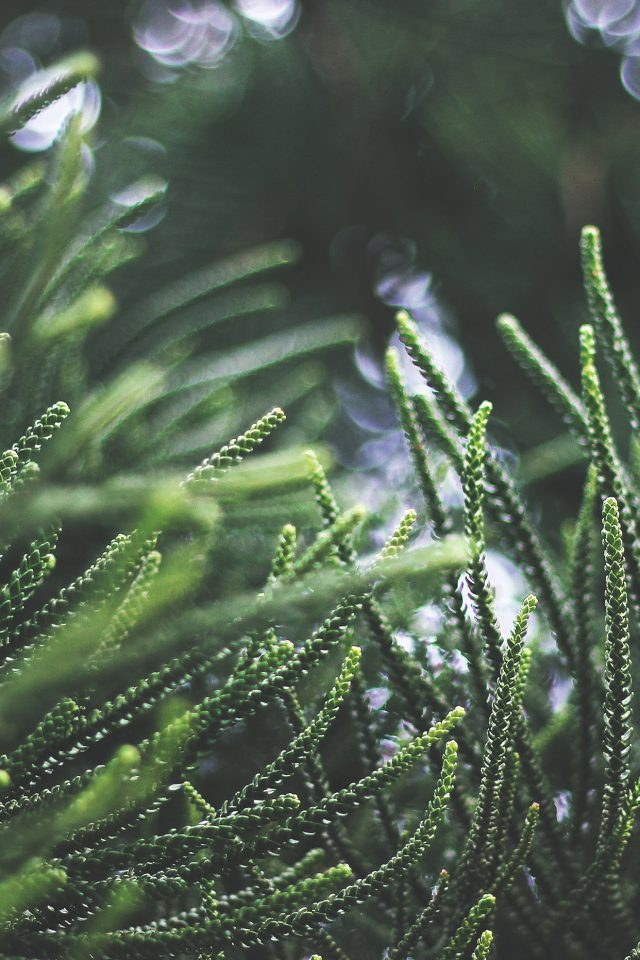 Tree Green Bokeh Nature Sprin Android wallpaper