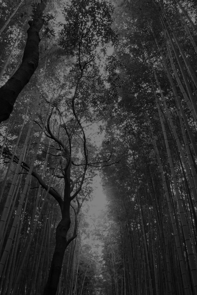Tree Walk Street Nature Mountain Air Dark Android wallpaper