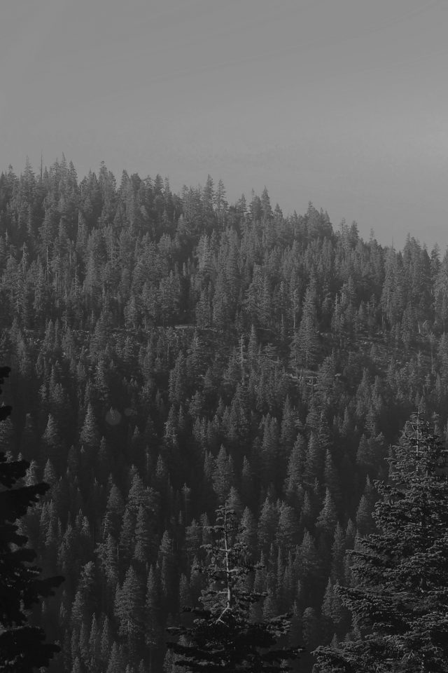 Tree Wood Mountain Nature Dark Bw Android wallpaper