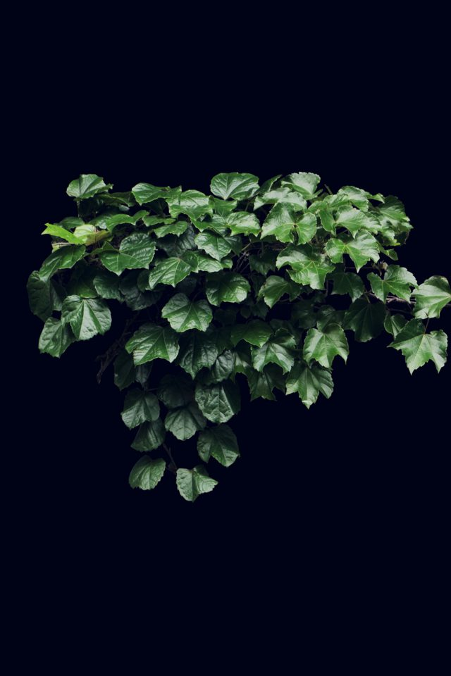 Truevine Dark Nature Green Flower Leaf Android wallpaper
