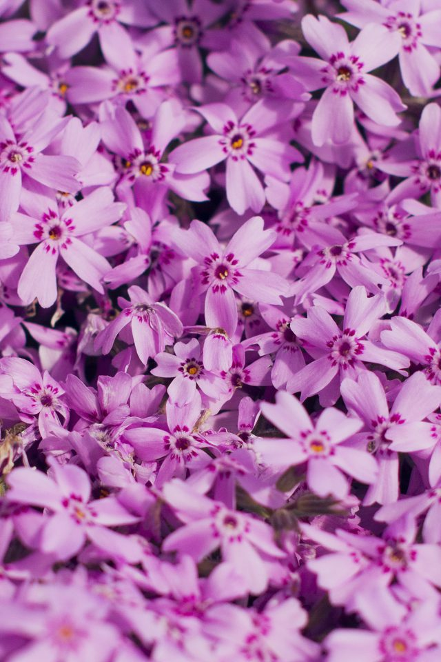 Violet Flower Nature Party Spring Blossom Android wallpaper