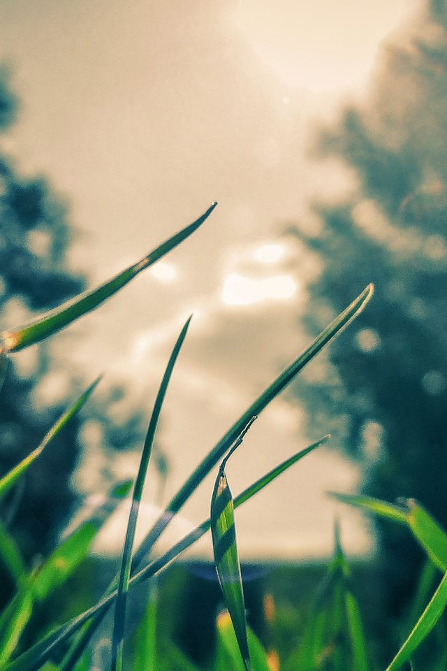 Wallpaper Grass Sunshine Leaf Nature Android wallpaper