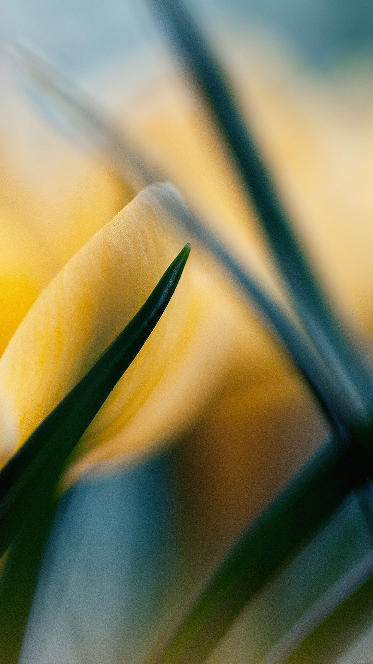Wallpaper Yellow Crocus Flower Beauty Nature Android wallpaper