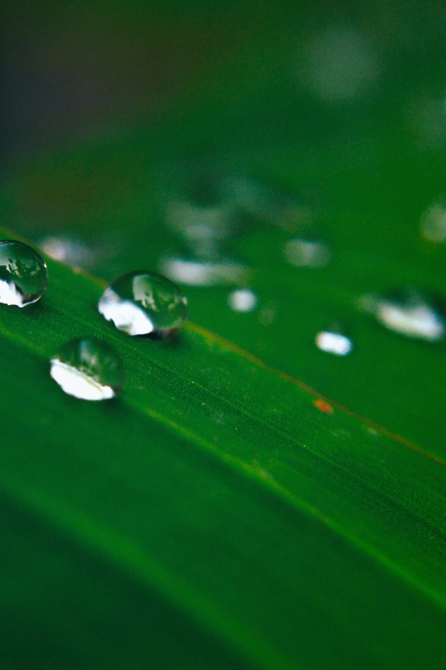Water Drops Nature Leaf After Rain Forest Android wallpaper