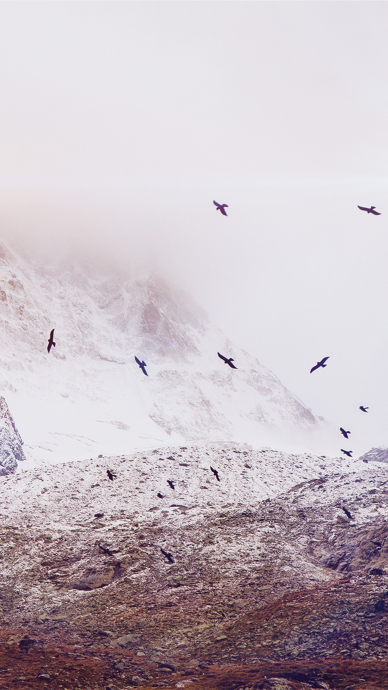 Winter Mountain Bird Rene Reichelt Flare Nature Android wallpaper