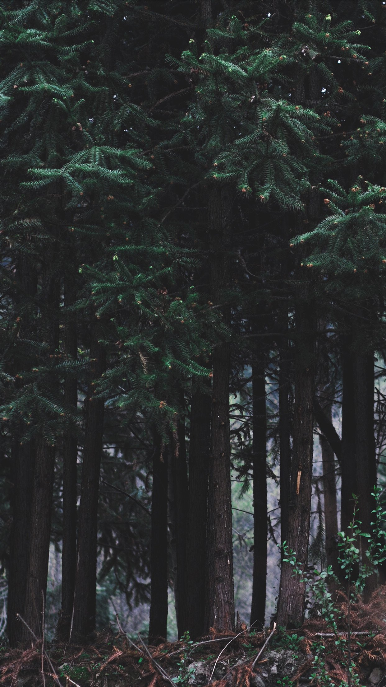 Simple Wallpaper Night Forest - Wood-Forest-Dark-Night-Tree-Nature  Photograph-831182.jpg