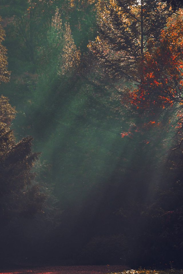 Wood Nature Tree Sunshine Light Fall Red Android wallpaper