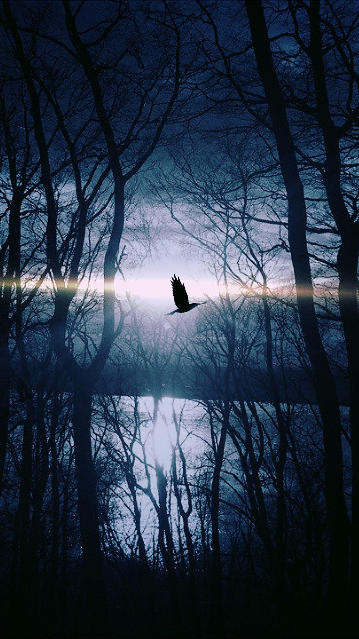 Wood Night Dark Nature Bird Fly Lake Android Wallpaper Android Hd