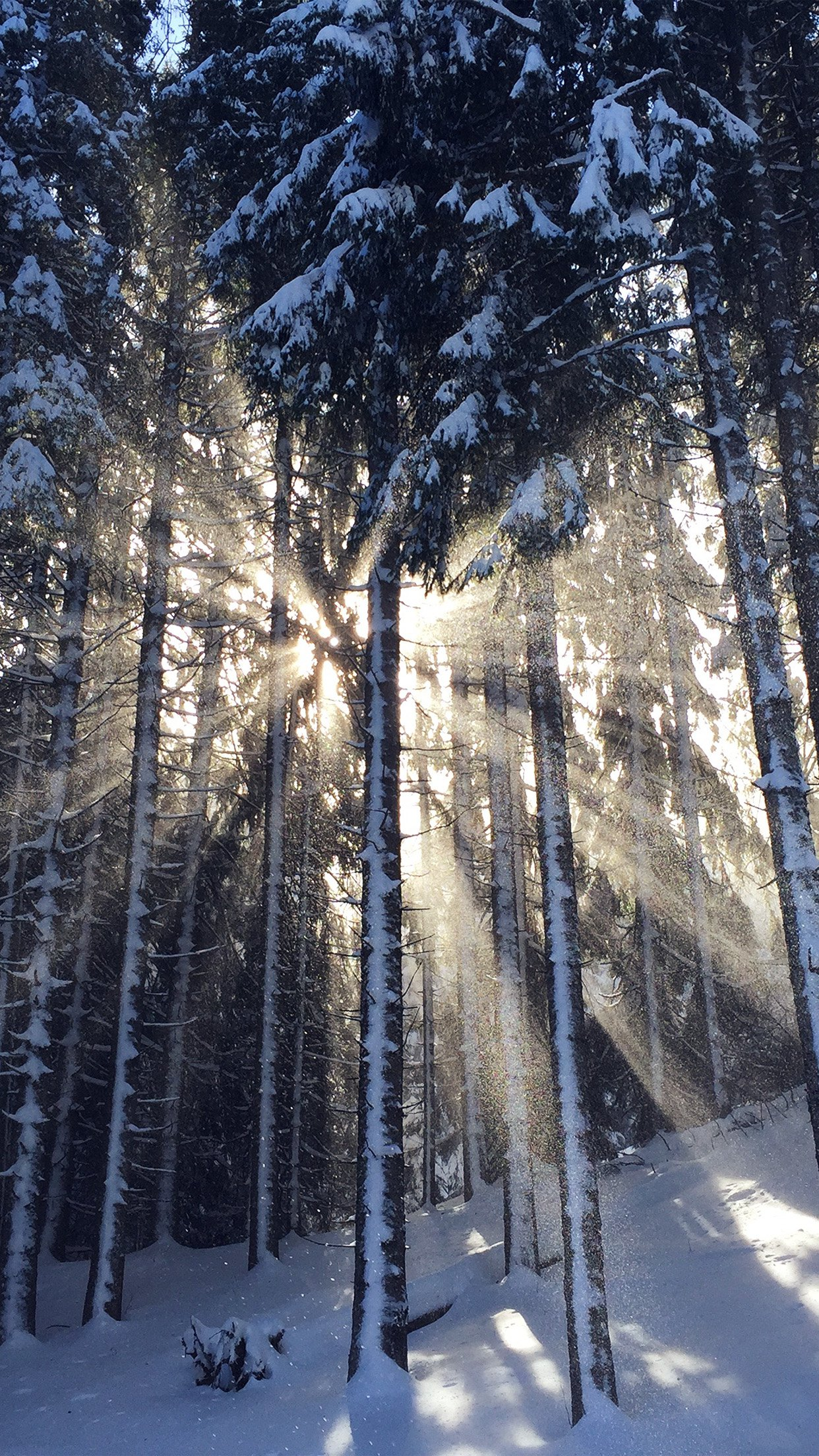 Wood Snow Winter Light Sun Nature Android wallpaper