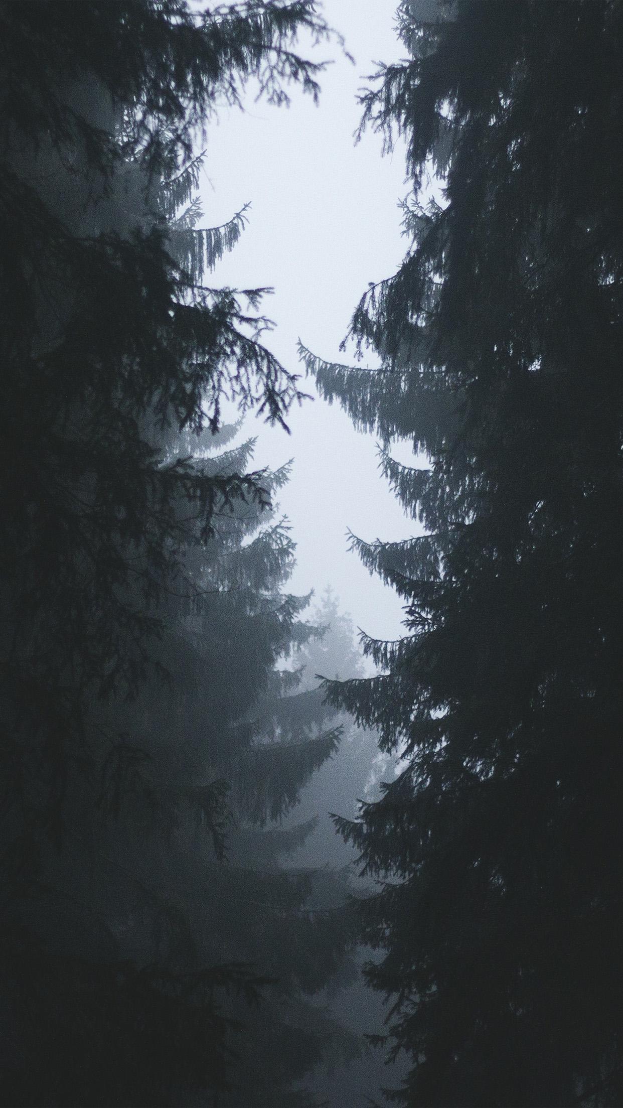 wood tree simple nature