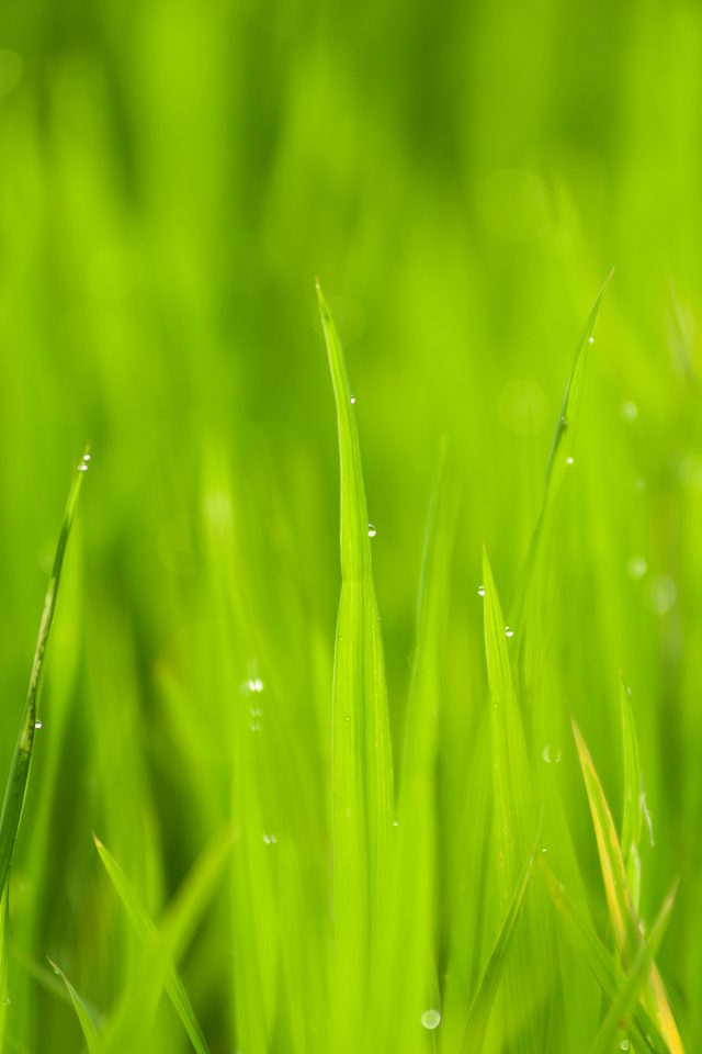 Lawn Flower Rain Bokeh Green Android wallpaper