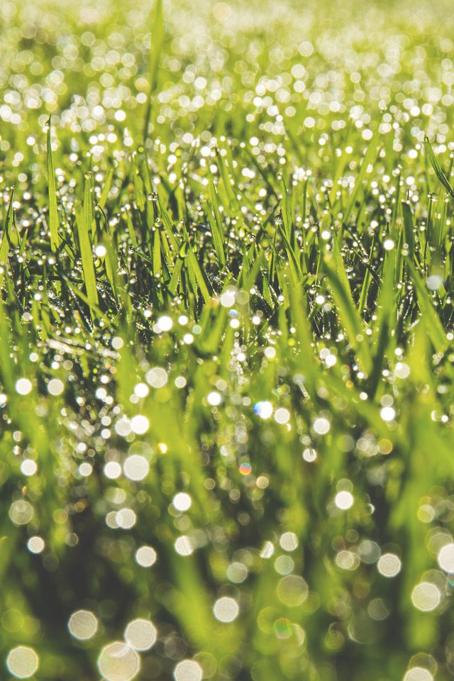 Lawn Green Spring Bokeh Light Android wallpaper