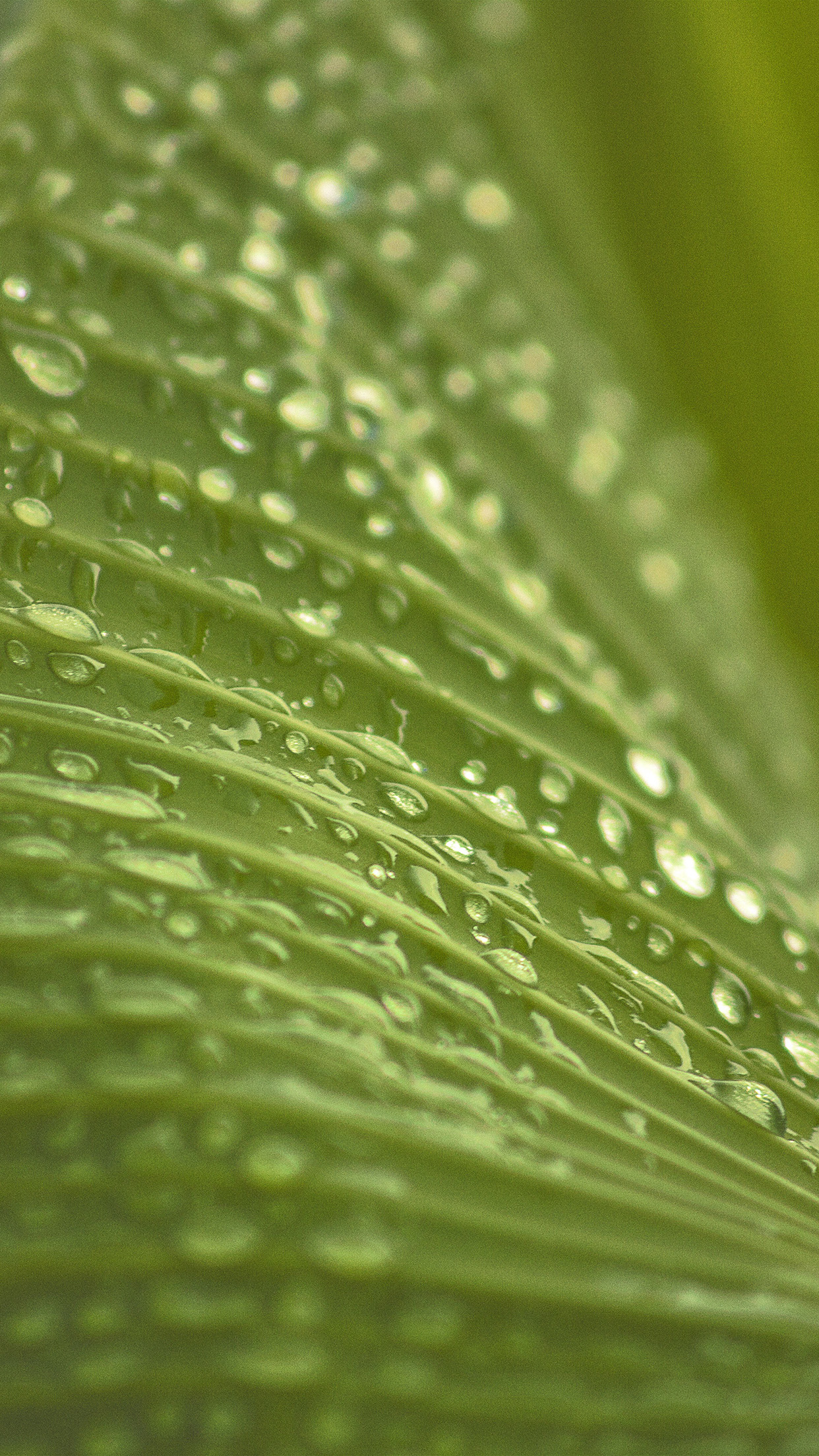 Leaf Rain Summer Green Bokeh Android wallpaper