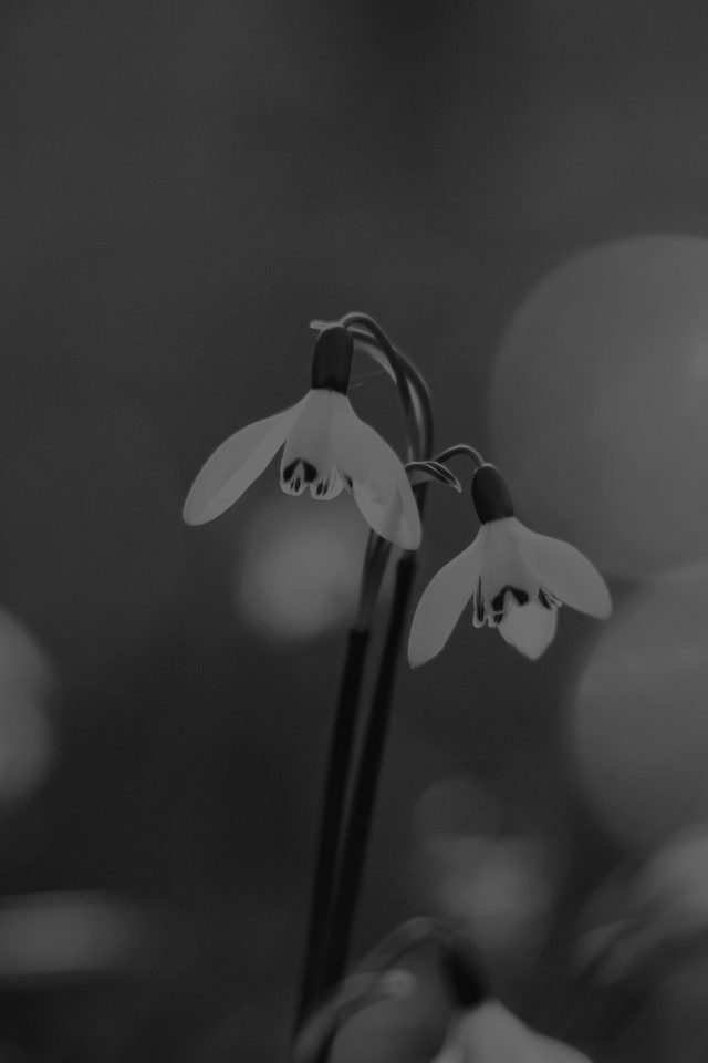 Uknown Flower Blue Bokeh Flare Dark Black Bw Android wallpaper