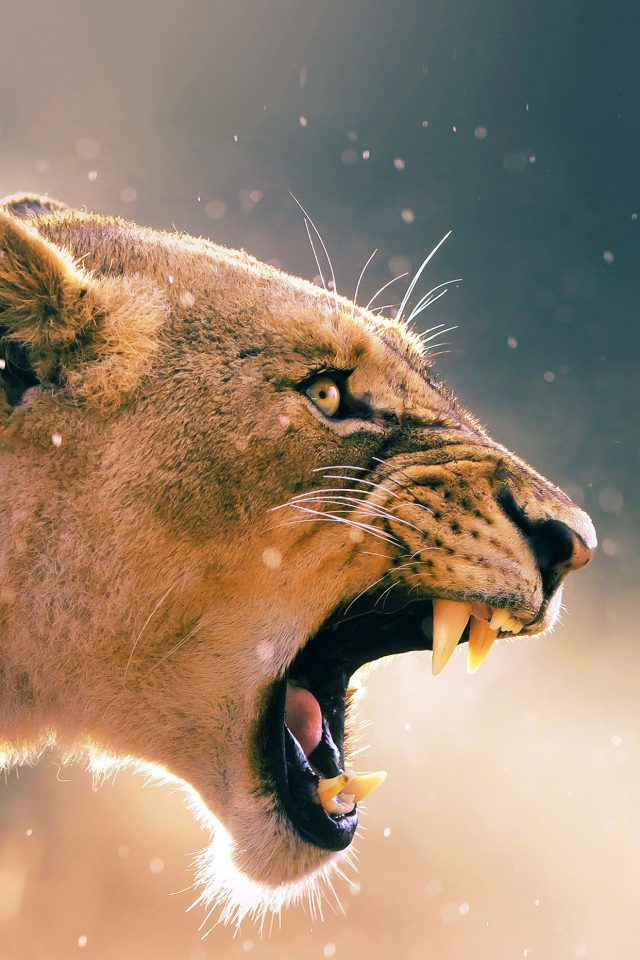 Angry Lion One Animal Nature Android wallpaper