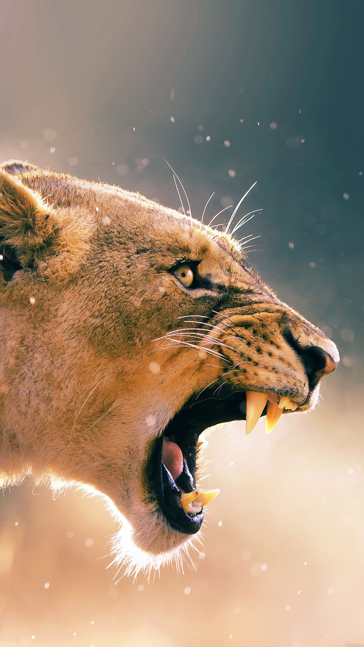 Angry Lion One Animal Nature Android wallpaper - Android ...
