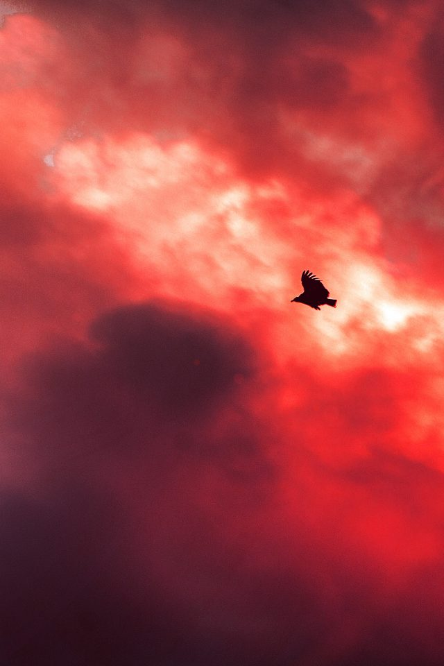 Bird Fly Sky Clouds Red Sunset Fire Nature Animal Android wallpaper