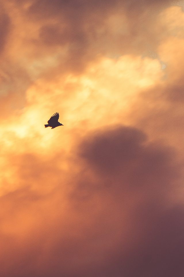 Bird Fly Sky Clouds Red Sunset Nature Animal Android wallpaper