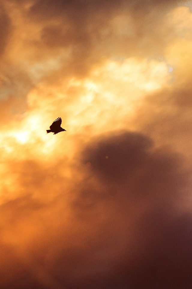 Bird Fly Sky Clouds Red Sunset Nature Animal Flare Android wallpaper
