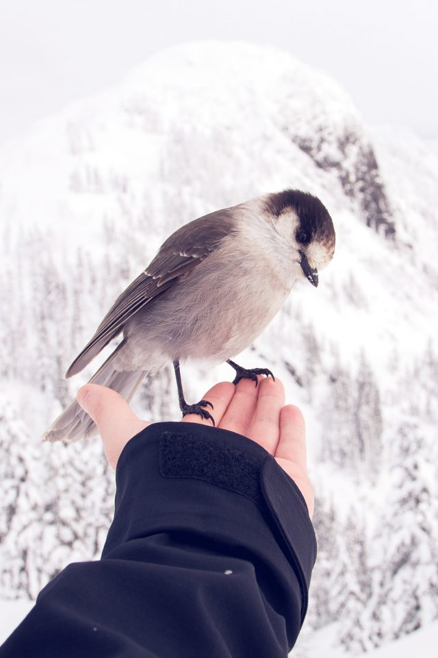 Bird In My Hand Snow Winter Cold Animal Android wallpaper