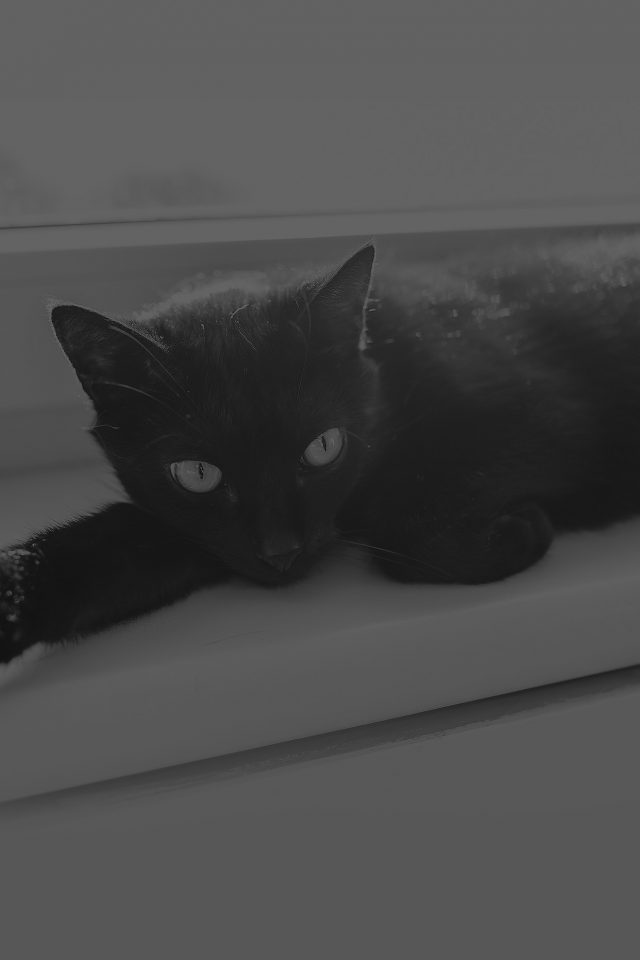 Black Cat Animal Cute Watching Dark Bw Android wallpaper