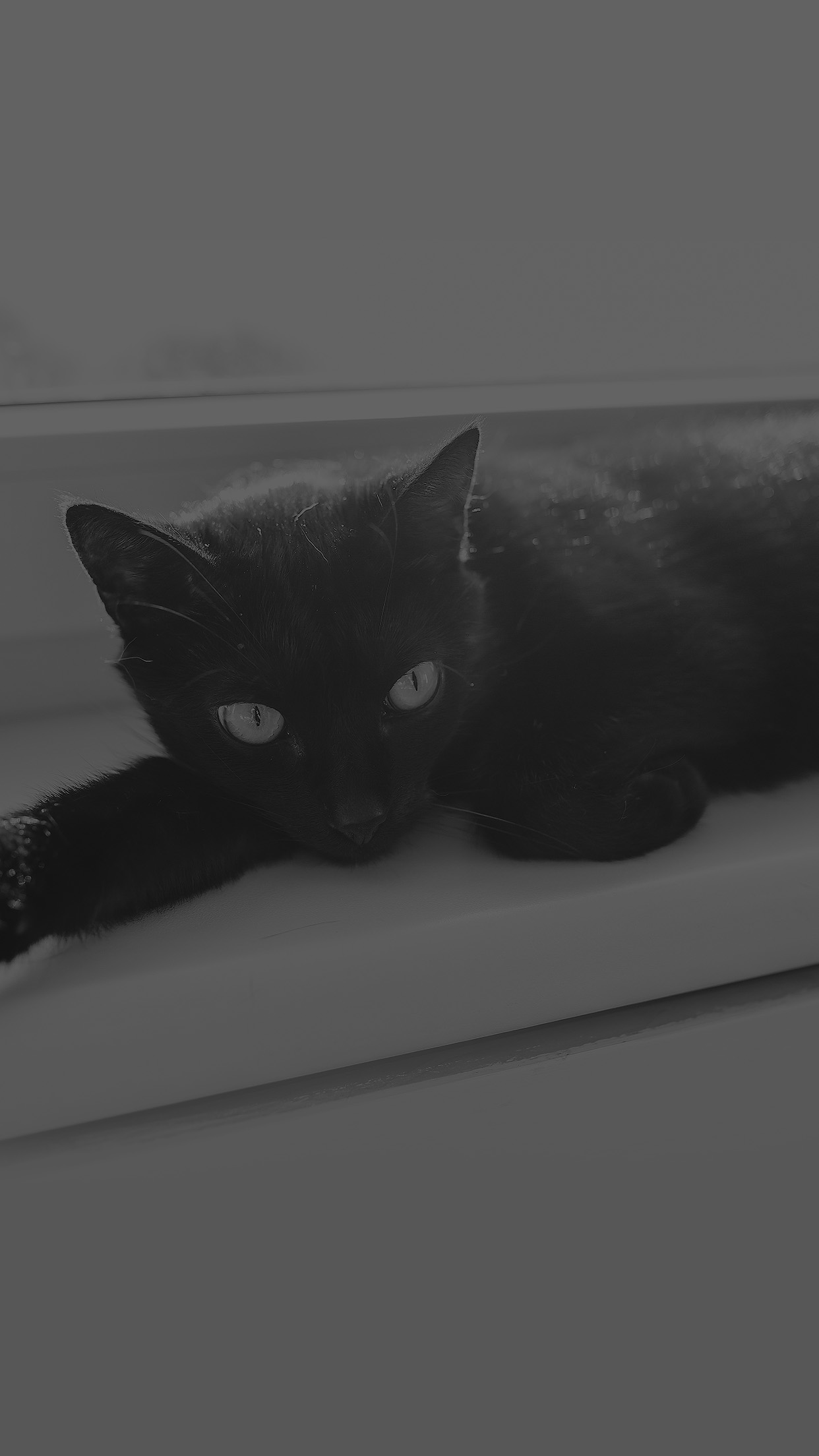 Black Cat Animal Cute Watching Dark Bw Android Wallpaper Android
