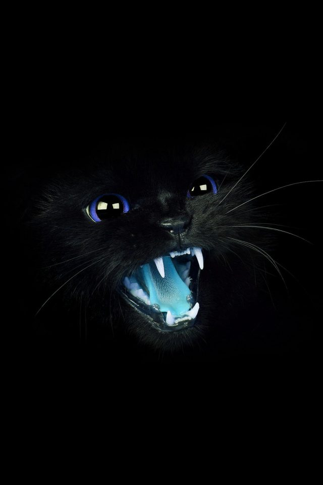 Black Cat Blue Eye Roar Animal Cute Android wallpaper