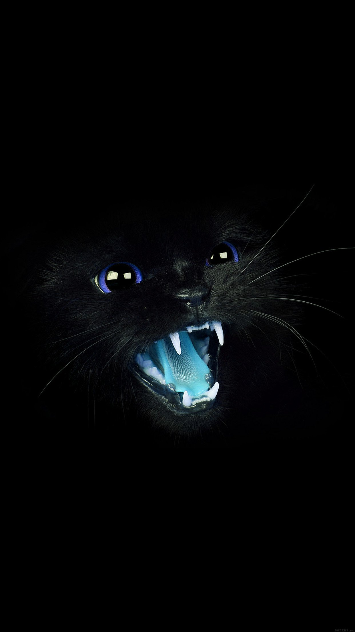 Black Cat Blue Eye Roar Animal Cute Android Wallpaper Android Hd