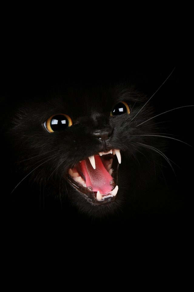 Black Cat Roar Animal Cute Android wallpaper