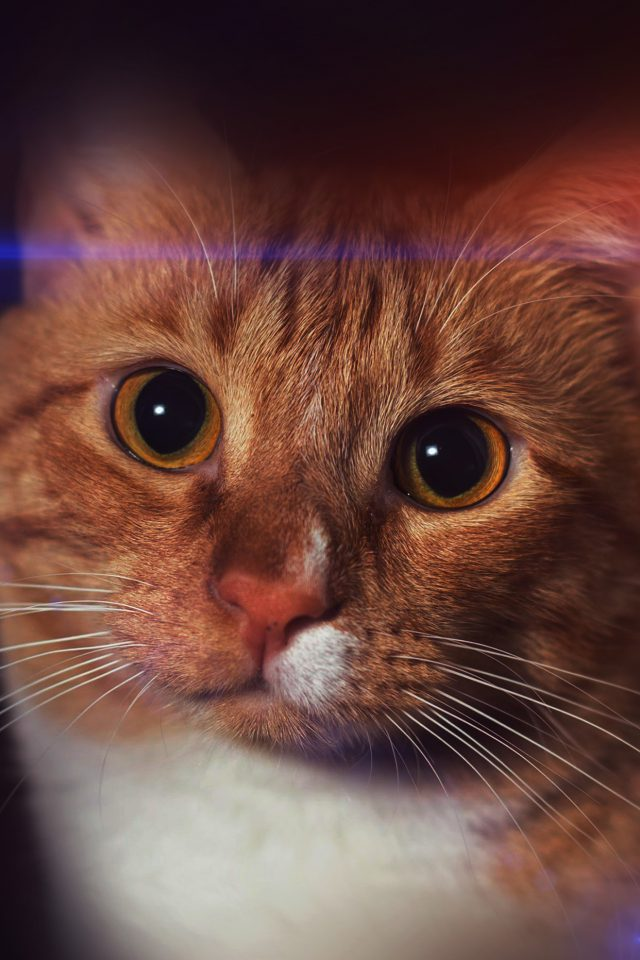 Cat Face Eye Animal Cute Nature Android wallpaper