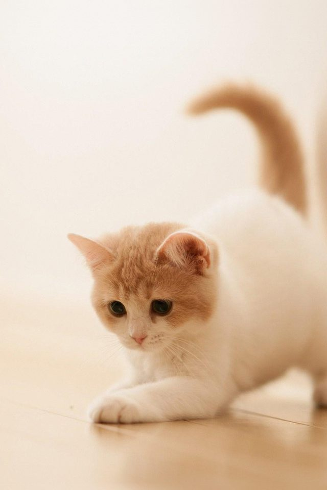 Cute Cat Kitten Animal Android wallpaper
