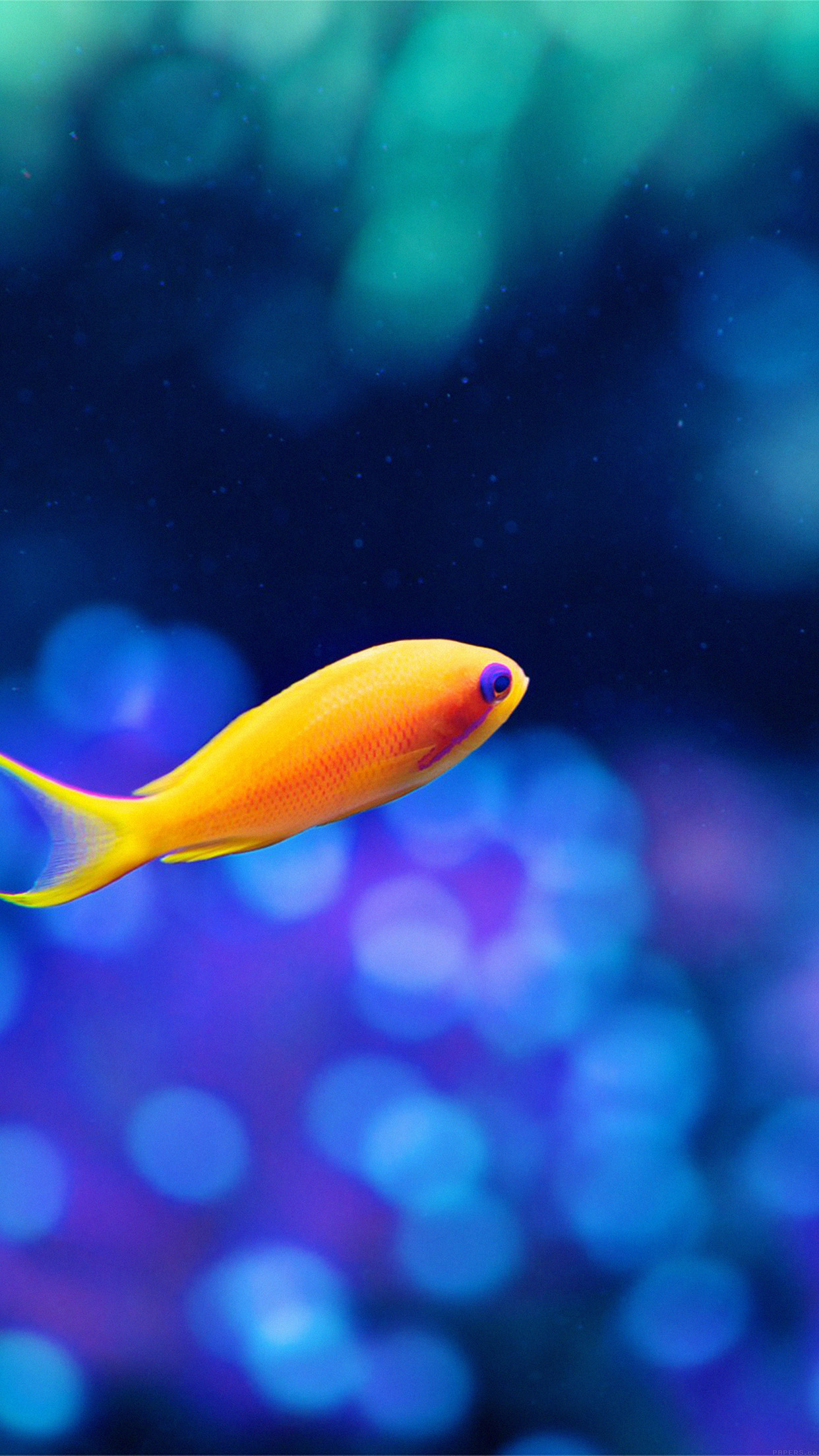 Cute Fish Ocean Sea Animal Nature Android wallpaper