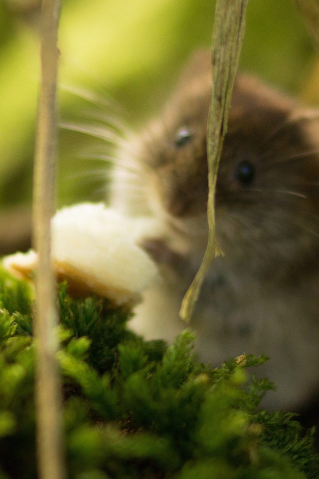 Cute Mouse Animal Nature Android wallpaper