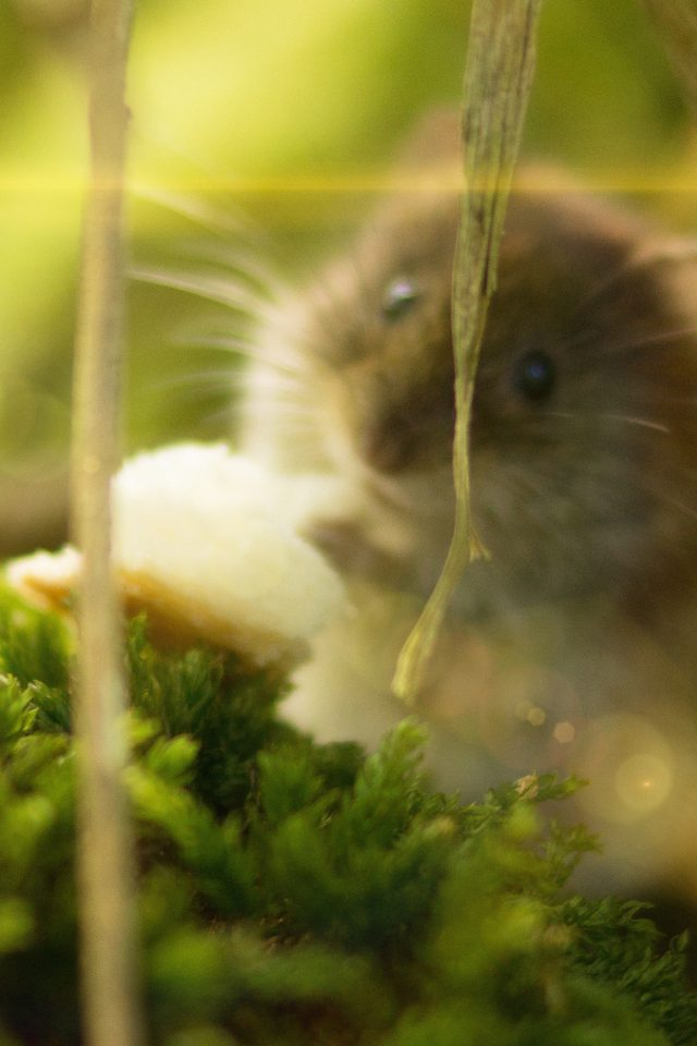 Cute Mouse Animal Nature Flare Android wallpaper