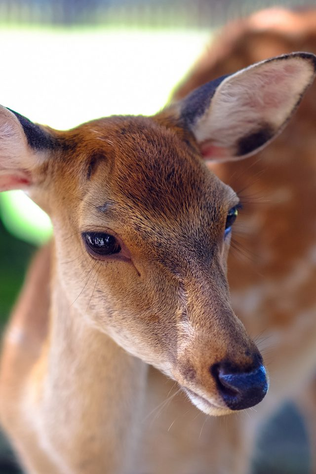 Deer Cute Animal Soft Nature Android wallpaper