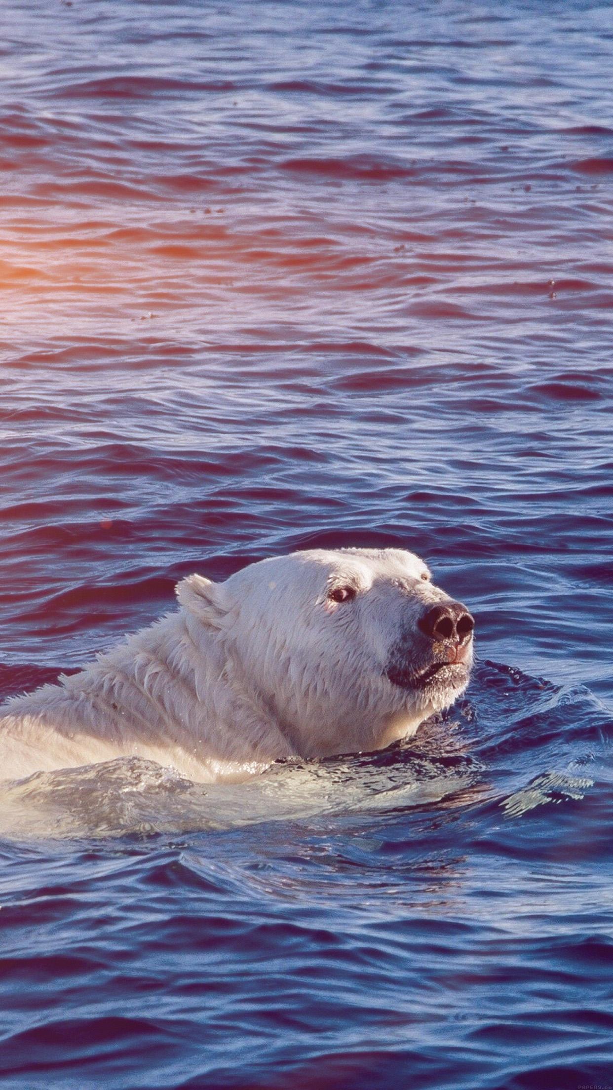 Dont Watch Me Swim Polar Bear Sea Animal Flare Android Wallpaper