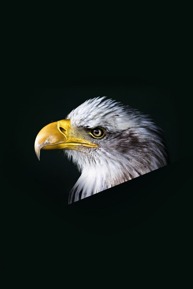 Eagle Dark Animal Bird Face Android wallpaper