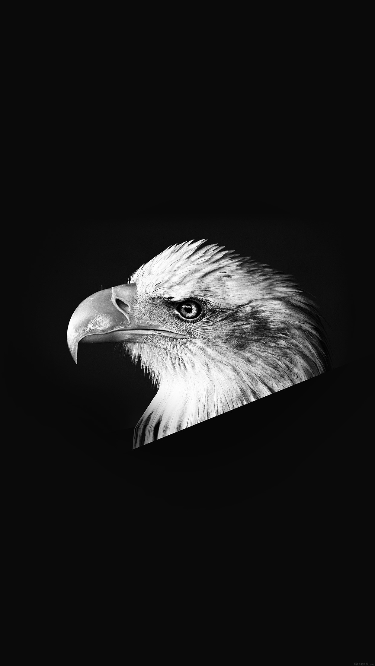Eagle Dark Animal Bird Face Bw Android wallpaper